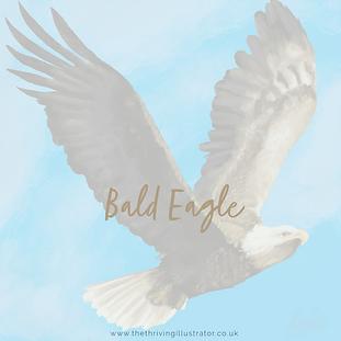 bald eagle display.png