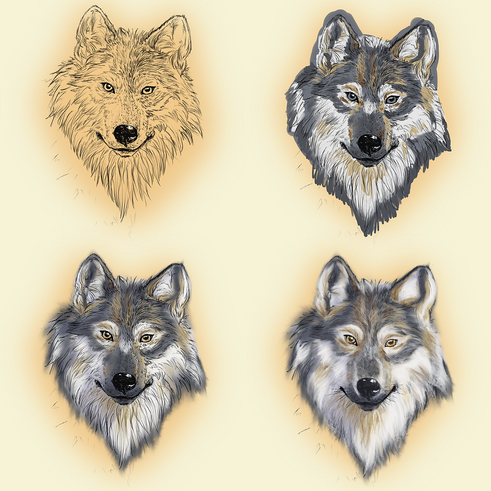 Four of the six steps to painting a wolf face digitally in Procreate.
