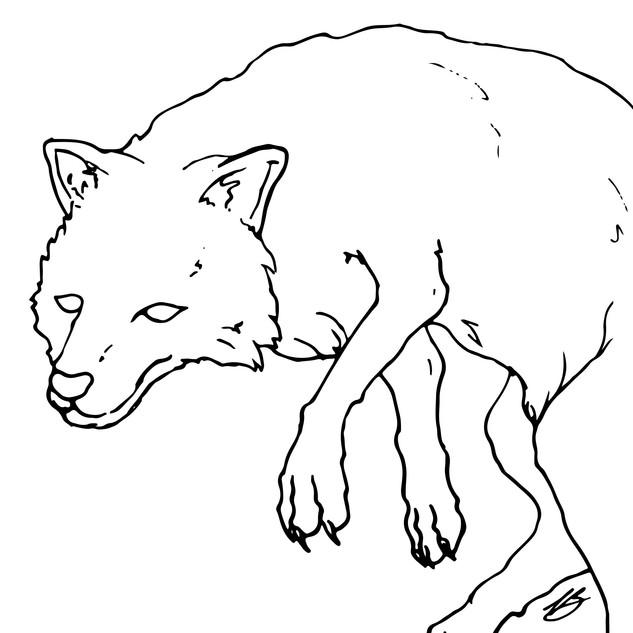 free-floating-fox.jpg