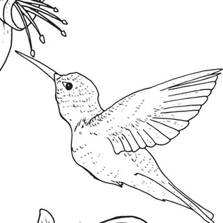 free-humming-bird.jpg
