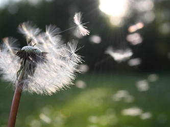 Formula Revealed For HOPE - no more wishful thinking!