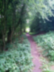 George and Dragon Forest path.jpg