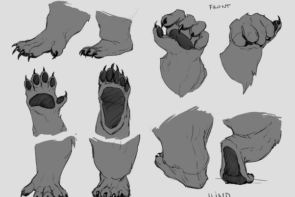 Front_and_hind_paws_-_Grayscale.png