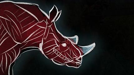 rhino-diagram3_orig.png