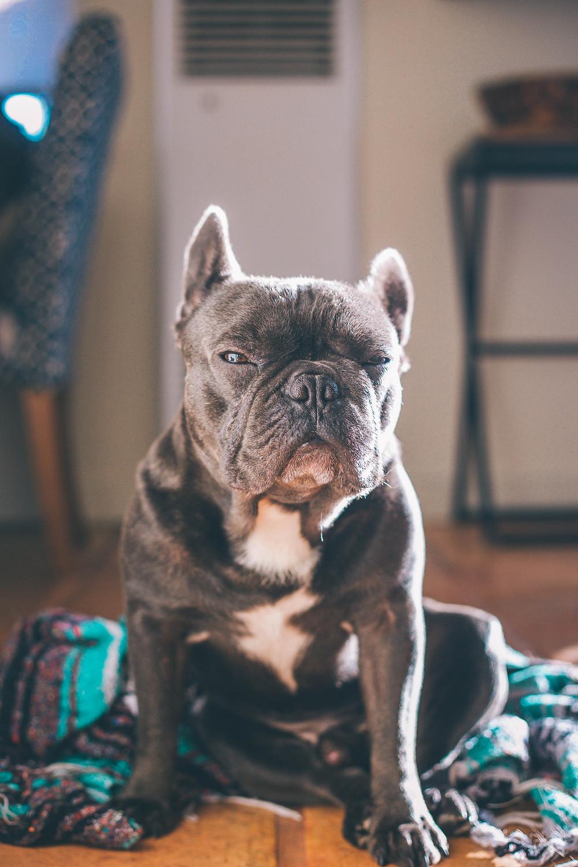 Grumpy Dog, Gentle Haven Music, Web Design, Musicians