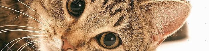 cat1_edited.jpg