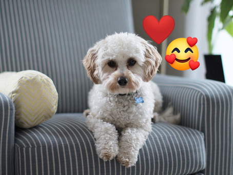 Getting through Social Distancing with our pets
