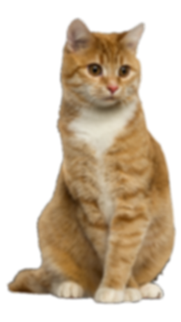 ginger cat.png
