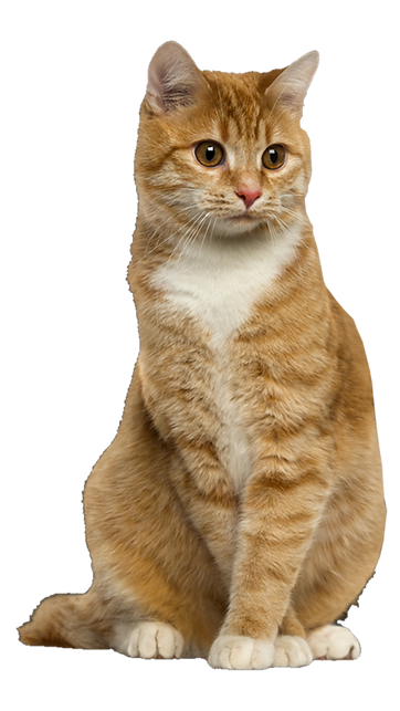 ginger cat.png