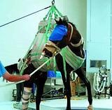 LIFTEX HORSE ANIMAL SLING_edited.jpg