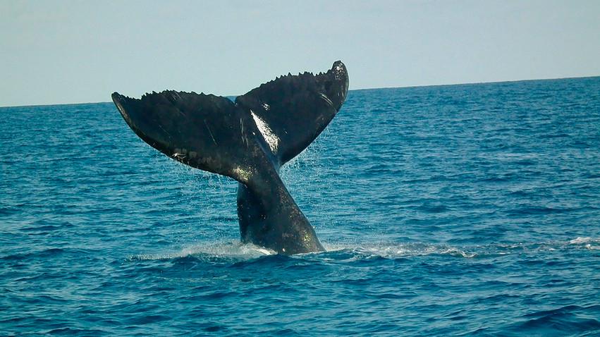 Avistamiento cetáceos Tarifa