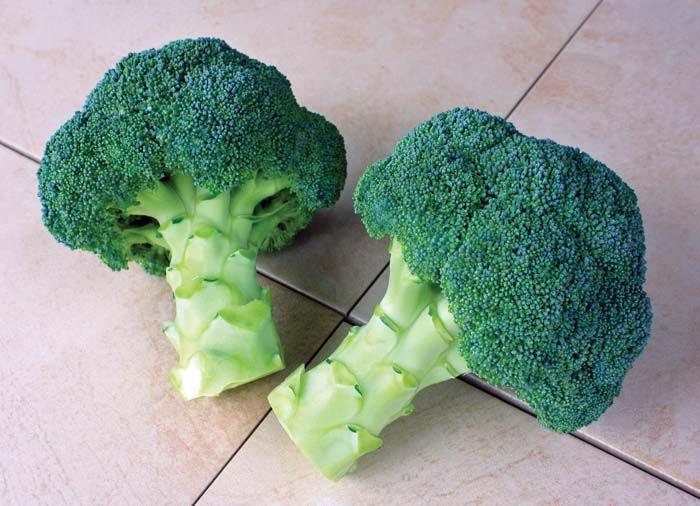 "Broccoli - Millenium 4"" pot"