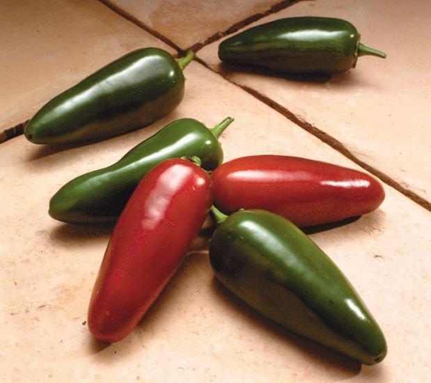 "Pepper - Jalapeno 4"" pot"