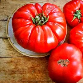 "Tomato - Sicilian Slicer 4"" pot"