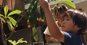 子どもたちには、実のなる木々のある環境を