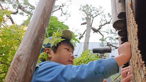 忍者の小屋を作る年長組の子どもたち