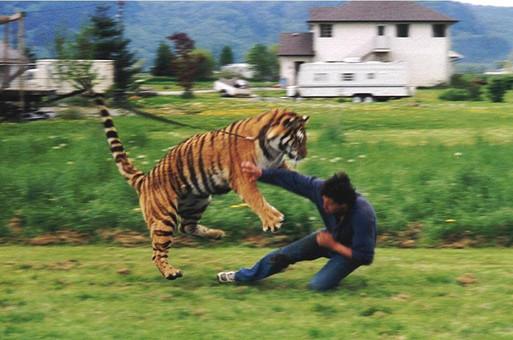 Tiger Training