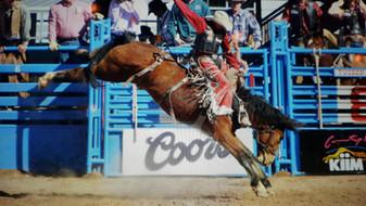 Rodeo Stock