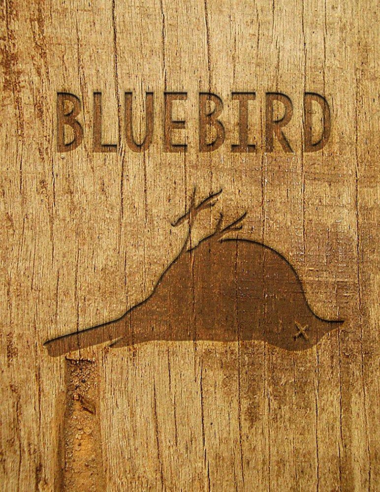 """""""Bluebird"""" 2017"""