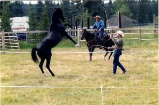 Training Liberty Horses
