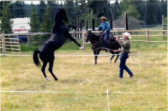 Training Liberty Horses