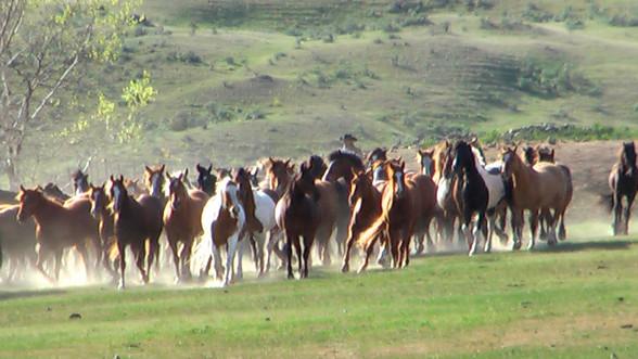 """""""Flicka 2"""" Herd"""