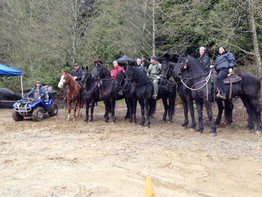 """Horses from """"Rise of the Planet of the Apes"""""""