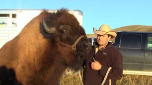 A Buffalo I Raised