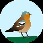 vogel (1).png