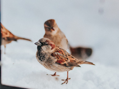 What is Grit? And Why is it Important in my Bird Feed?