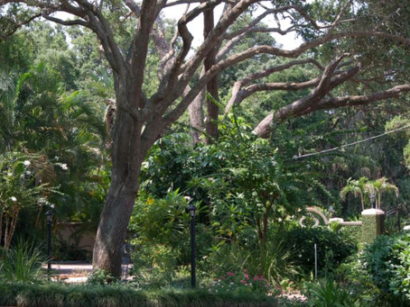 Why You Should Prune Your Trees