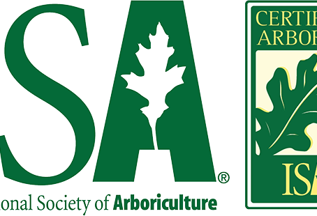 Questions To Ask Before Hiring An Arborist