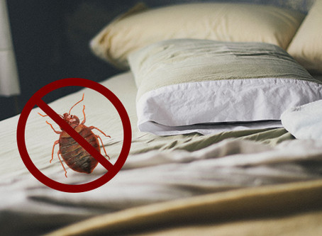 We Can Solve Your Bedbug Problem!