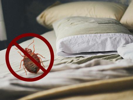 We Can Solve Your Bedbug Problem!