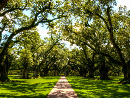 Best Shade Trees For Your Florida Landscape