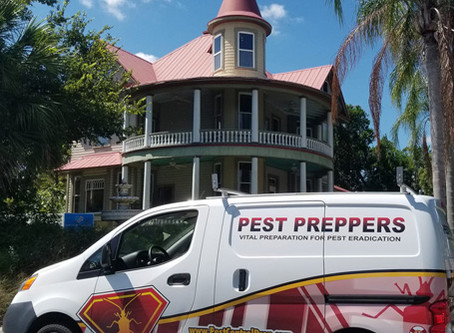 The Benefits Of Hiring Pest Control Experts