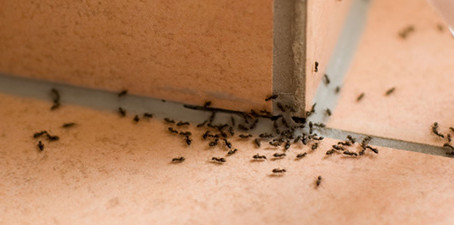 Fun Facts About Insects and Pests