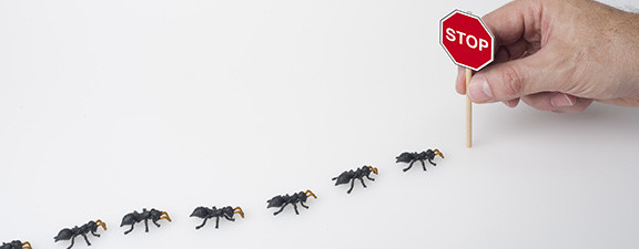 Ants marching in a row to a stop sign