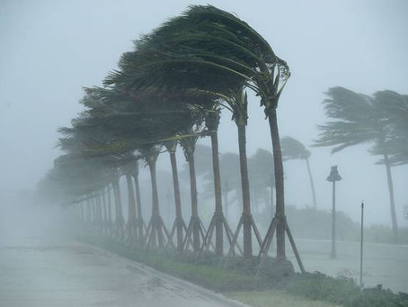 6 Tips To Keep Your Home Pest Free During Hurricane Season