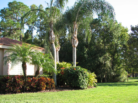 Landscaping Trends That Are Up And Coming In 2021