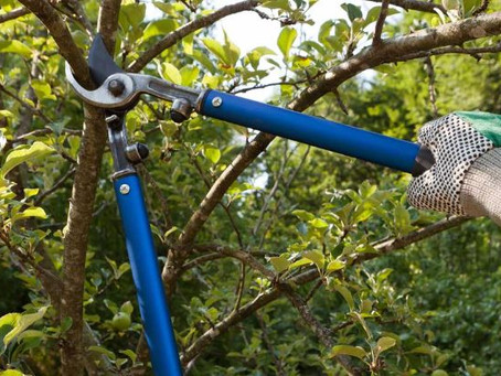 All About Pruning Your Trees