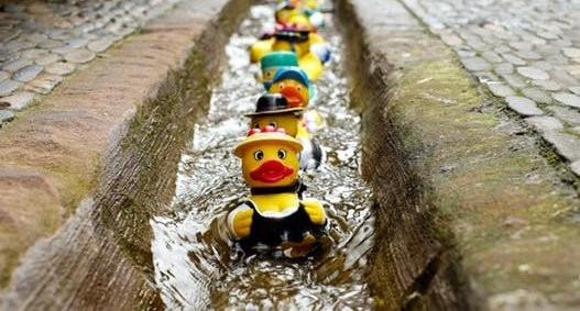 Ducks Lined Up In a Row In Water