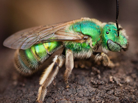 Bees:  Friend or Foe?