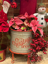 a rustic christmas tree plan pot on red stan