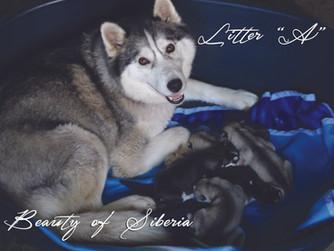 Narodili sa nám šteniatka!