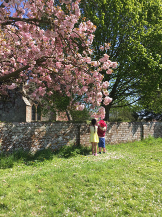 Catching blossom on the field, after enjoying a picnic lunch.