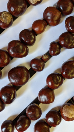 Lines and designs with shiny conkers!