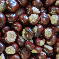 We have lots and lots of shiney conkers ...