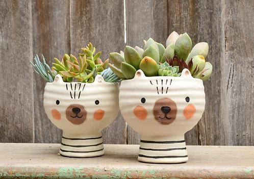 Cute 'Olli' Bear White Ceramic Animal Planter Plant Pot