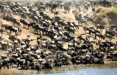 migration_kenya_masai_mara_7_3.jpg